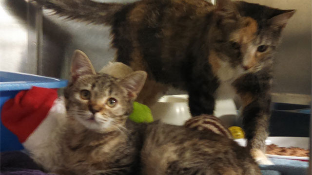 Beverly Animal Shelter Pets of the Week for 8/19/16